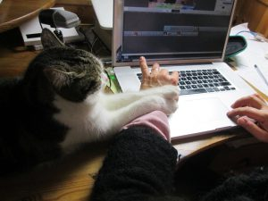 Cat helds arm working on computer