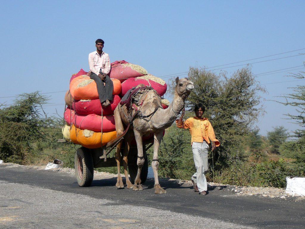 Overloaded camel