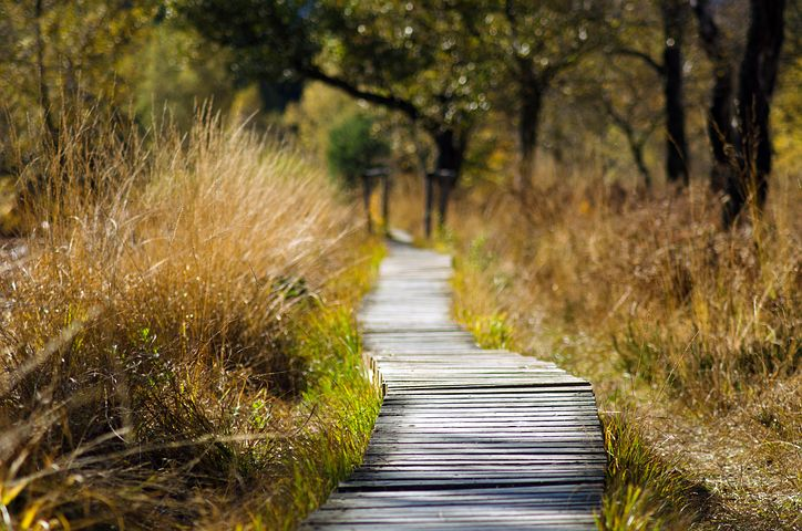 wooden-track in nature
