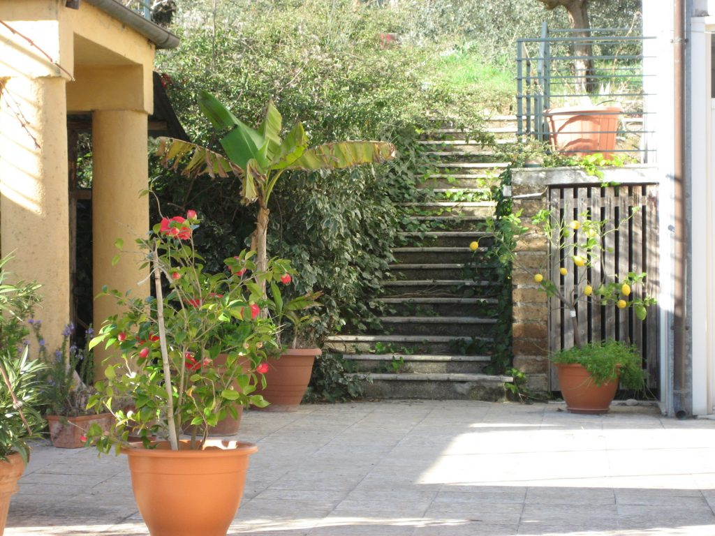 courtyard with flower pots and stairs into green