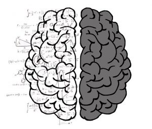 brain, both hemispheres