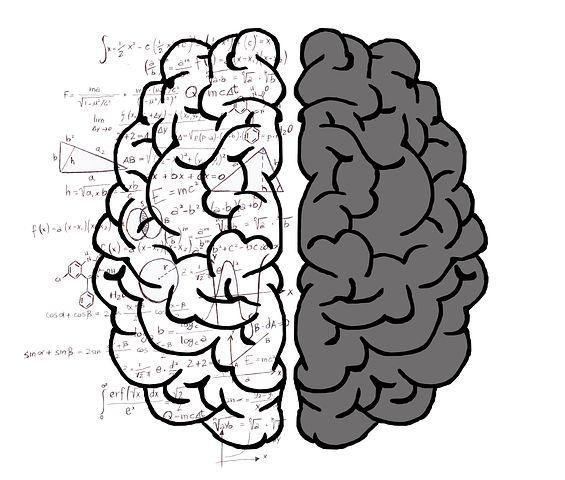 brain, both hemispheres
